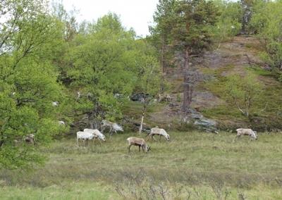 04-Norwegen-nach-Alta