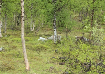 05-Norwegen-nach-Alta